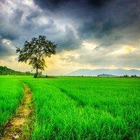Természet képei